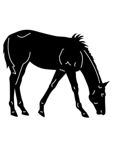 Cowboys-and-Horses-23