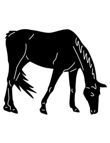 Cowboys-and-Horses-24