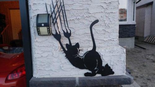 Crazy cat #3s