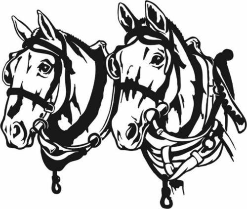 Horse team #48