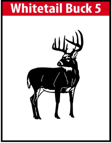 Whitetail Buck 5 JPG Image File