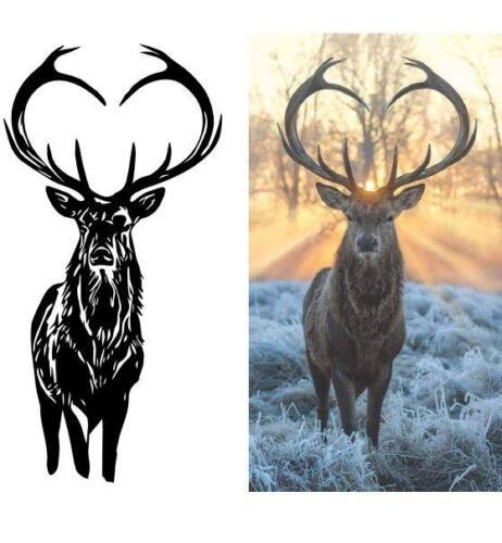 deer photo trace