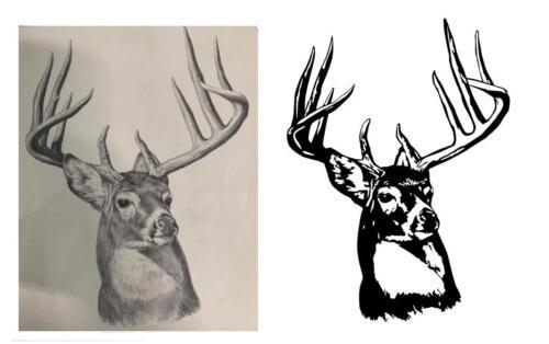 deer trace