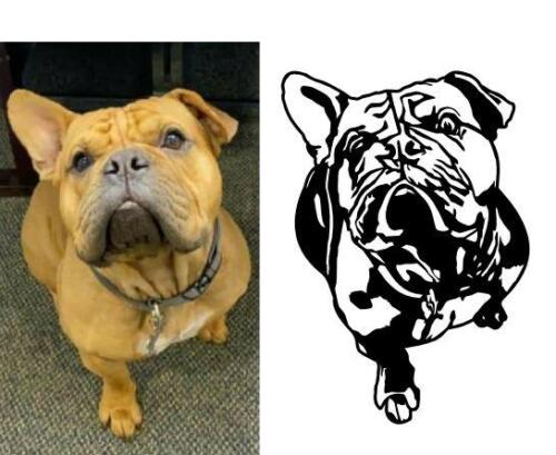 dog trace bulldog