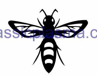 hornet 4 imageWM (1) (1)