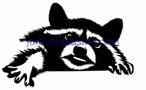 racoon 18 imageWM (1) (1)